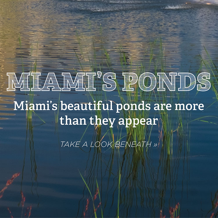 Miami's ponds. Miami's beautiful ponds are more than they appear. Take a look beneath » Photo of ripples in a blu pond with a fountain.